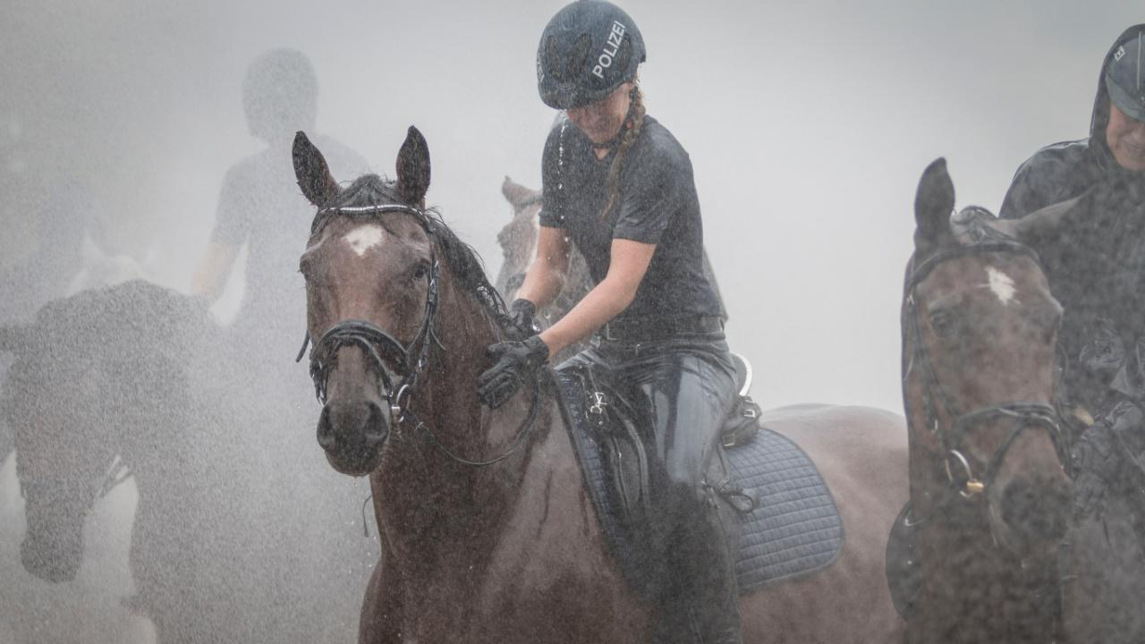 Das Glück der Pferde  – ihre Reiter*innen auf die Erde